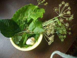 Набор травы и зелени для засолки