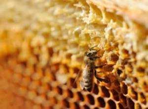 как лучше лечиться медом
